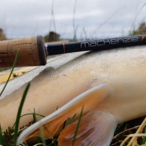 Trout with the fly fishing rod that caught it in Iceland