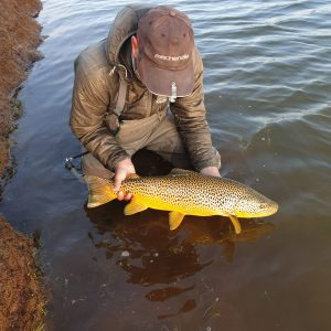 Brown trout caught in Iceland