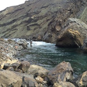 Hunting for salmon in rivers of Iceland