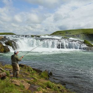 Hooked salmon in West Ranga River in Iceland